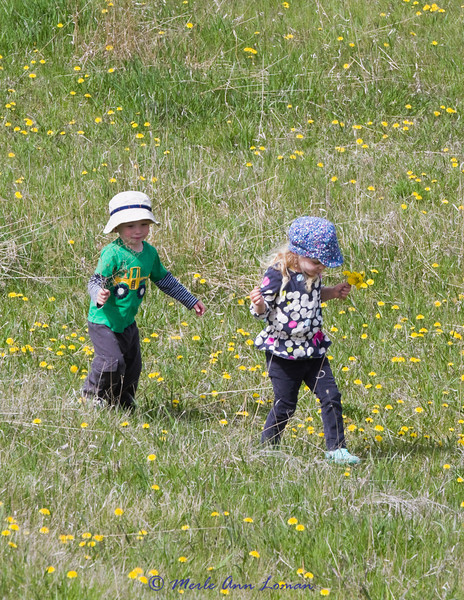 Carter and Lillian in the field below the house. What kid doesn't love dandelions. The one flower we grownups don't mind if the pick and there are certainly plenty of them.