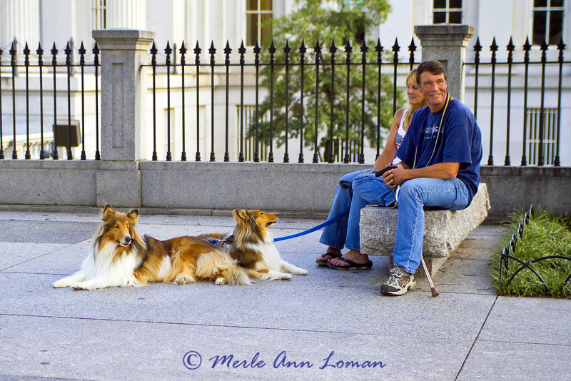 Just east of the White House in Washington, DC on Pennsylvania Ave. These two beautiful collies are sisters.