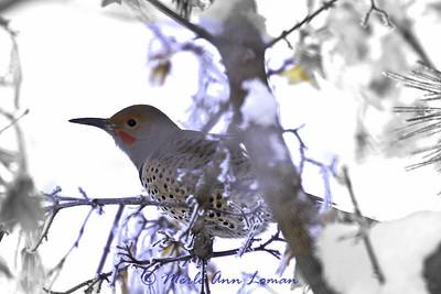 Birds in December snow