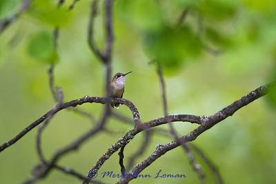Female. taken May 30, 2012.