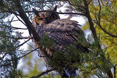 Taken Oct 22, 2010 on Mission Creek in the National Bison Range Wildlife Refuge.