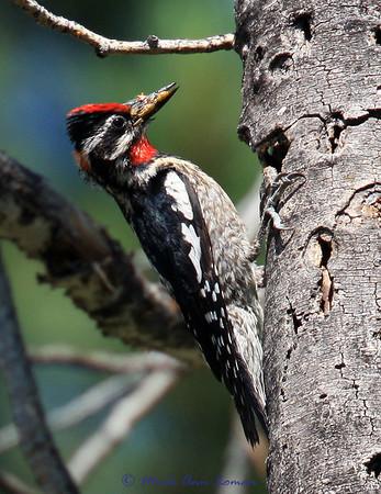 Gallery - Fine Art Bird Photos for sale