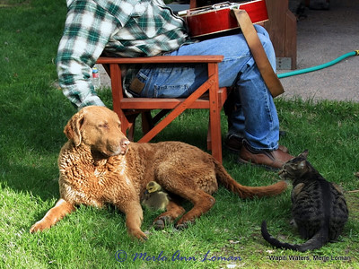 May 21. Bela our Chesapeake is making sure our cat, Timmy, keeps his distance.