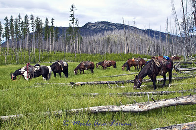 2013 NBC Montana Weather Calendar - COVER of Engagement Calendar. The group was eating lunch and let horses enjoy timothy grass in the meadow. Looking west to south fork of Flathead River between burned area and mountains.