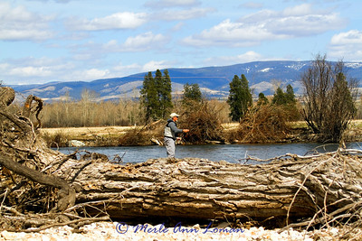 Roy fishing the Bitterroot. Big wood (down Cottonwood tree) in the foreground, Sapphire Mountains in the background.