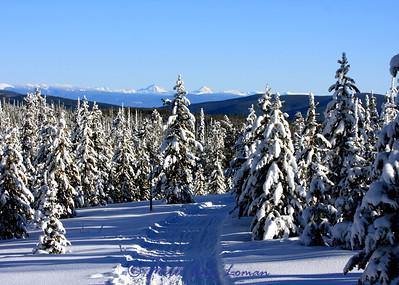 Chief Joseph Cross Country Ski Trail