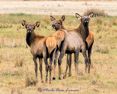 Three youngsters straying from the herd