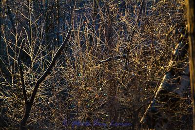 Landscapes, woods, general outdoors