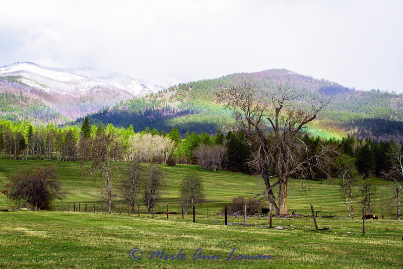 Rainbow traveling across the Bitterroot Mountains near Bear Creek April 28