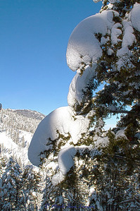 Snowscape_IMG_2322-H