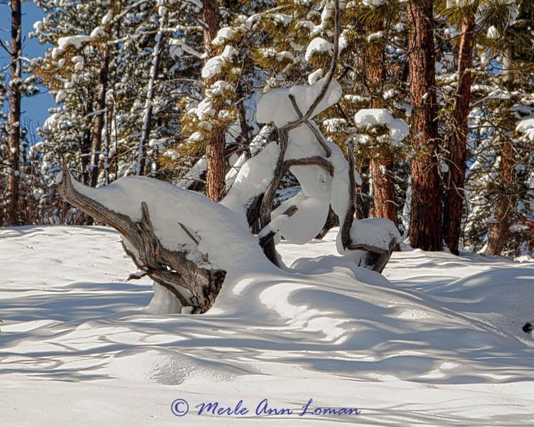 Snow_IMG_2211_H