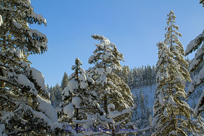 Snowscape_IMG_2289-H