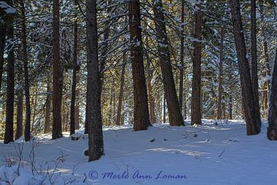 Snow_IMG_2241_H