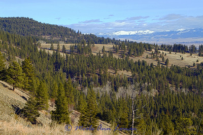 Hiked up Sweathouse Creek Ridge on New Years Day 2014 - not much snow.