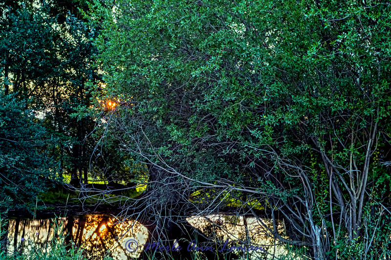 """Sunrise in the Bitterroot near Sweathouse Creek 8.2.2015 - a little smoke in the sky makes the sun red.  ¯\_(ツ)_/¯ Please share and like the A Montana View Facebook page! Thanks so much for viewing. 