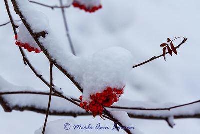 Winter in western Montana