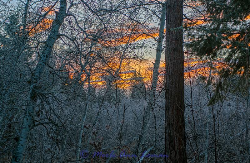 Sunrise in the aspens