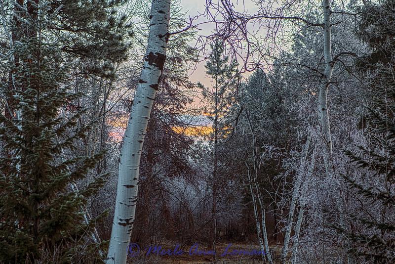 Sunrise west of Victor, Montana, USA IMG_3844