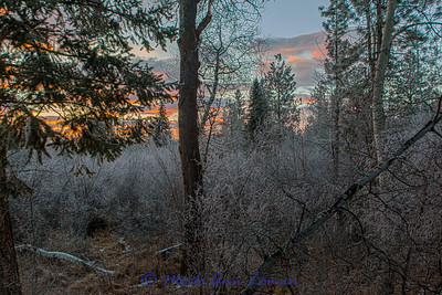 Sunrise in the woods west of Victor, Montana, USA IMG_3862