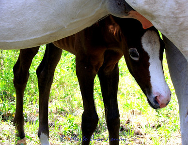 Petey the Appy Rascal - Renee's new filly (Appaloosa)