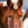 Sweetness in a mule.