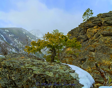 Bitterroot Mountains west of Victor, MT. Bear Creek Overlook looking at Totem Peak in April. Bonsai tree and trunk on the rock. IMG_1739