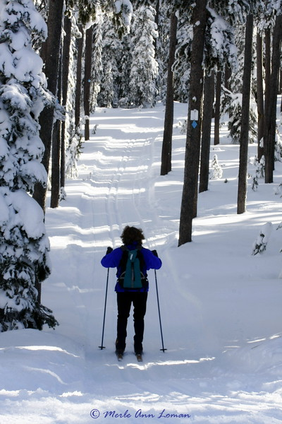 Lost Trail Pass, Chief Joseph cross country ski trails, December 26, 2009
