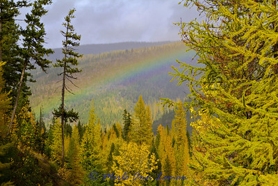 Rainbow over the forest.