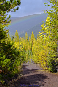 Rainbow over western larch are turning gold and will loose their needles soon. Cottonwood on the right edge of photo.