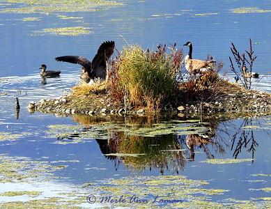 Lee Metcalf Wildlife Refuge