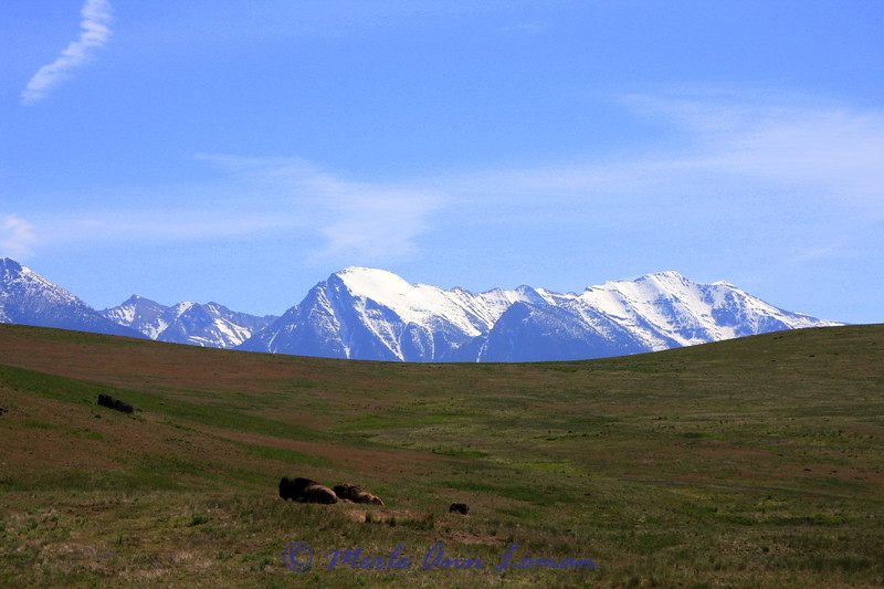 Mission Mountains and bison