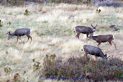 National Bison Range in late October