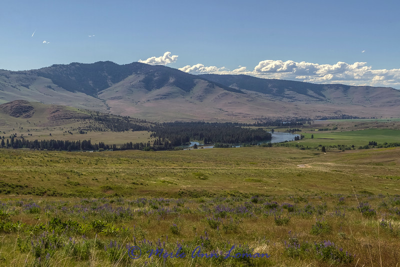 "Flathead River near Dixon. Lupine is blooming IMG_8563<br /> ¯\_(ツ)_/¯ Please share and like the A Montana View Facebook page! Thanks so much for viewing. | visit  <a href=""http://www.amontanaview.com"">http://www.amontanaview.com</a> 