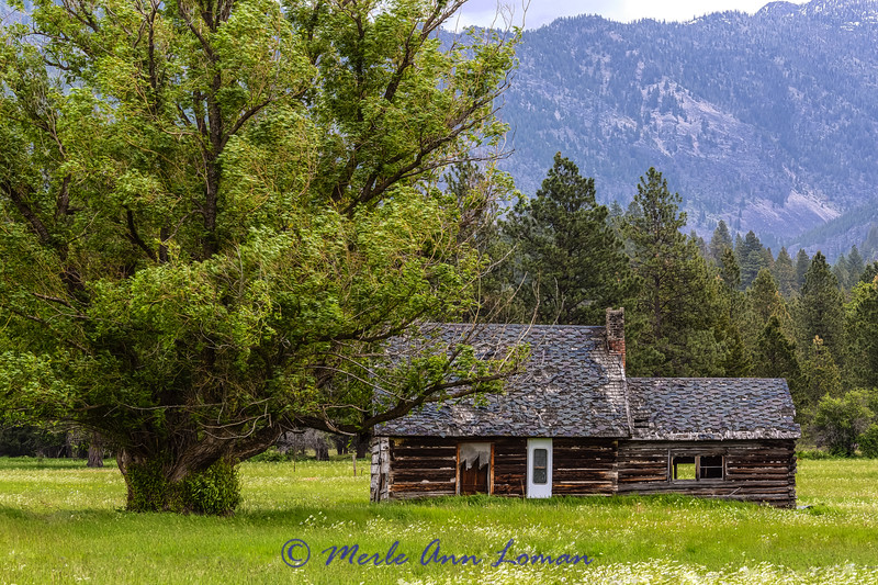 Cabin north of Arlee on a very windy day. IMG_9040