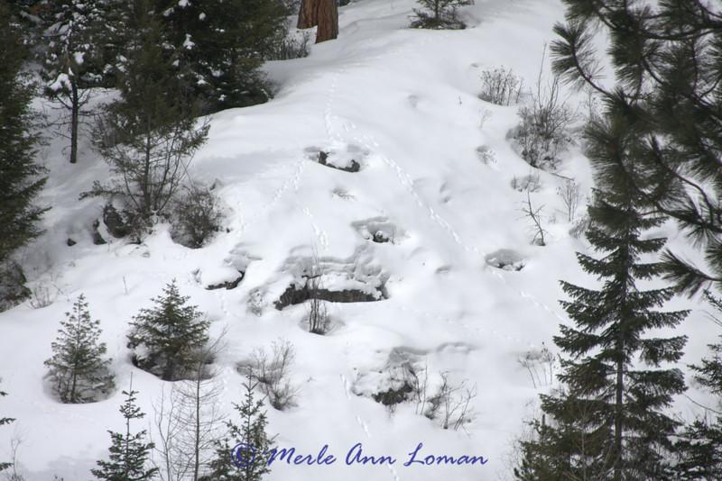 Small mammal tracks on the snow