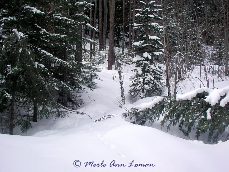 Animal tracks heading into the timber