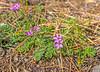 20151014-3R9B9361-wildflower-5x7