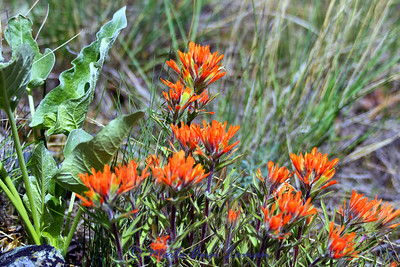 Spring 2012 wildflowers
