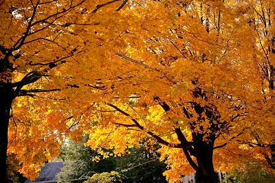 Fall Colors in New Jersey