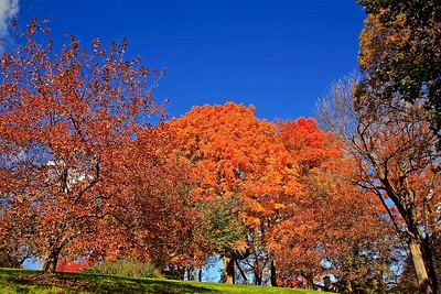 The Colors of Autumn in New Jersey