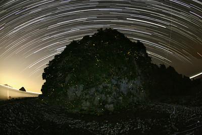 ヒメボタルの島 愛媛県 (Firefly2017-05)