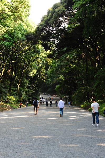 ...the peaceful Yoyogi Park and Meiji Shrine - just steps away from crazy Harajuku