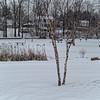 Island Park, Eaton Rapids003(001)