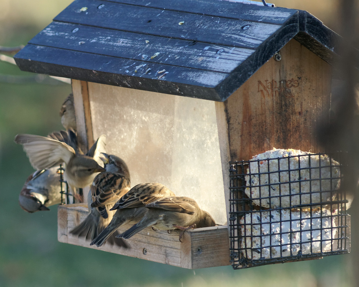 Someone Oughta Fill That Feeder028