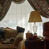 Window003