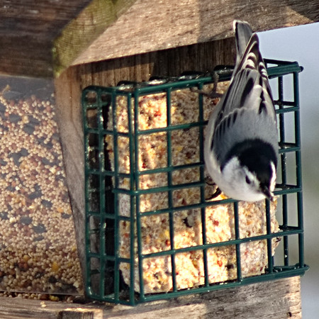 Did Someone Mention a Nuthatch?