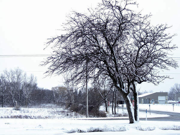 Snow and Tree