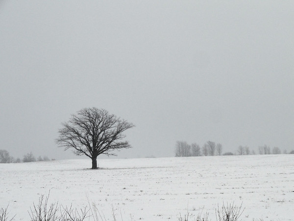 A Tree in a Field