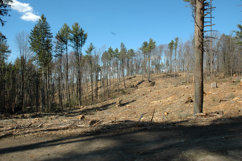"It's hard to imagine that this kind of devastation was allowed in the name of ""timber management""."
