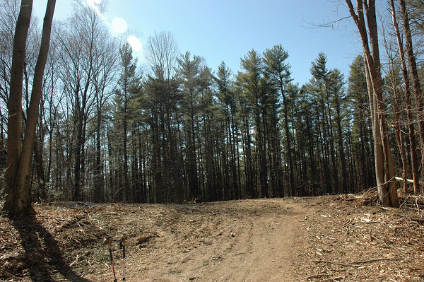 Ruthless Clearcutting